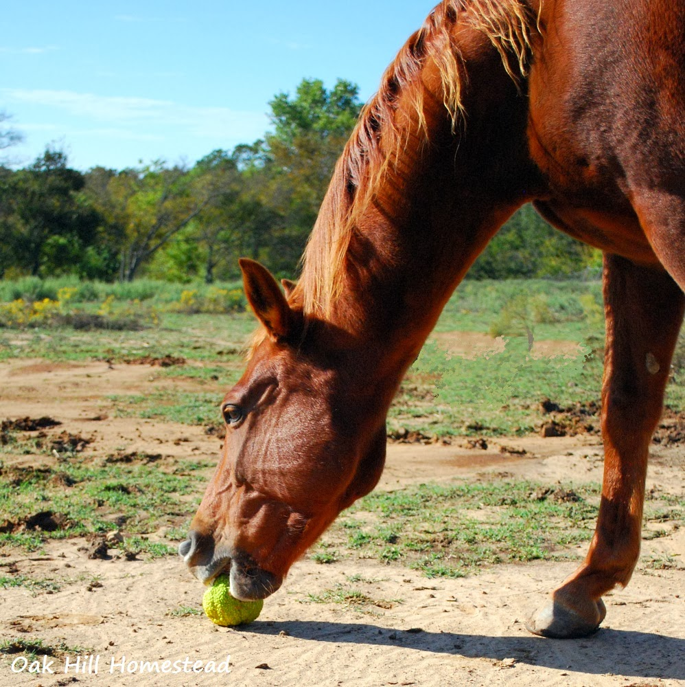When I Go Out To Feed The Horses Can Smell Osage Oranges A Sweet Fl Scent On Evening Air