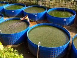 Cara Membuat Kolam Bioflok Lele Yang Sederhana Dengan Biaya Rendah