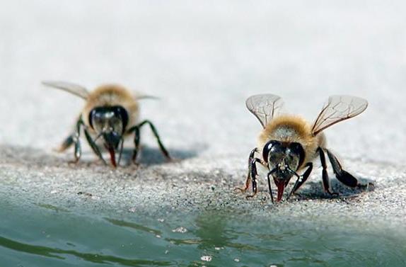 Νέα πατέντα, ποτίστρα για όσους έχουν λίγα μελισσάκια!