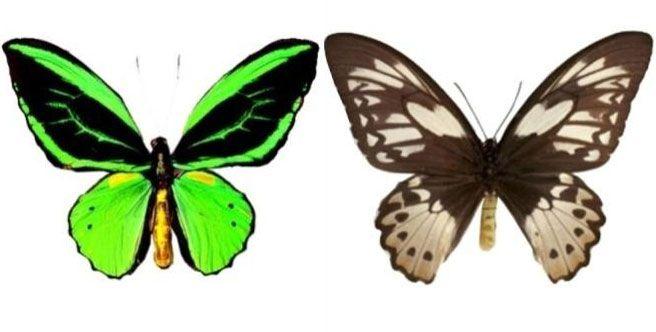 adalah sebuah tempat wisata di Kabupaten Tabanan dan juga taman pelestarian dan penangkar Taman Kupu-kupu Bali (Bali Butterfly Park) di Tabanan