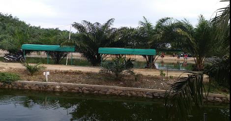Kolam Pemancingan Ikan Bon Sawit Pelaihari