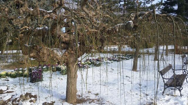 הפארק הבוטני של יאש בחורף