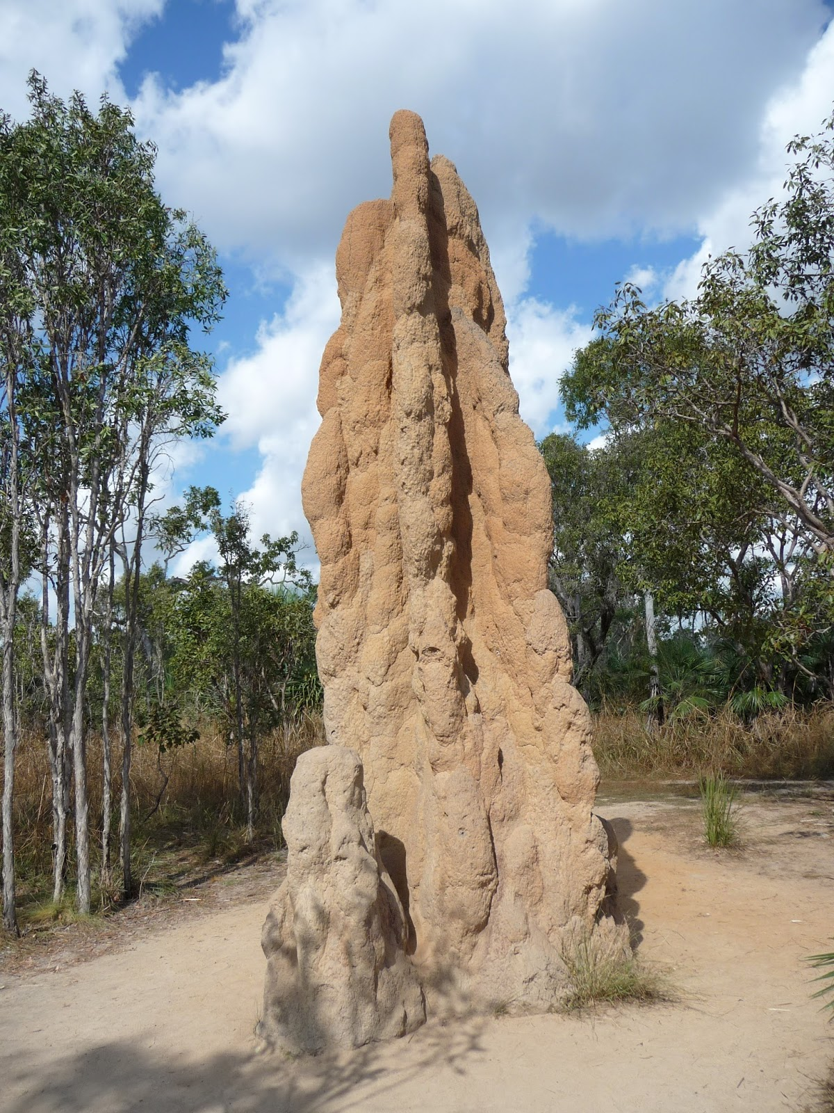 Picture of a termite mound.