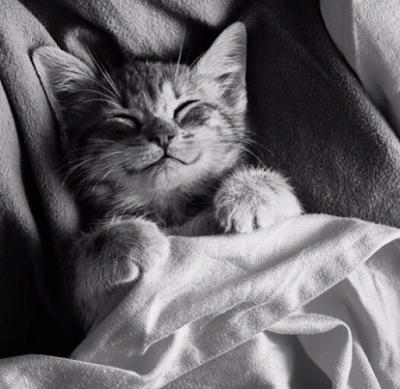 şımarık kedi