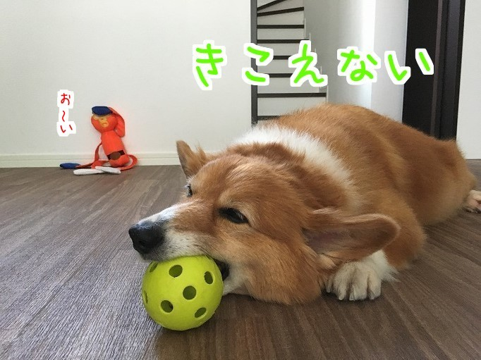オレンジレンジャーと風太01