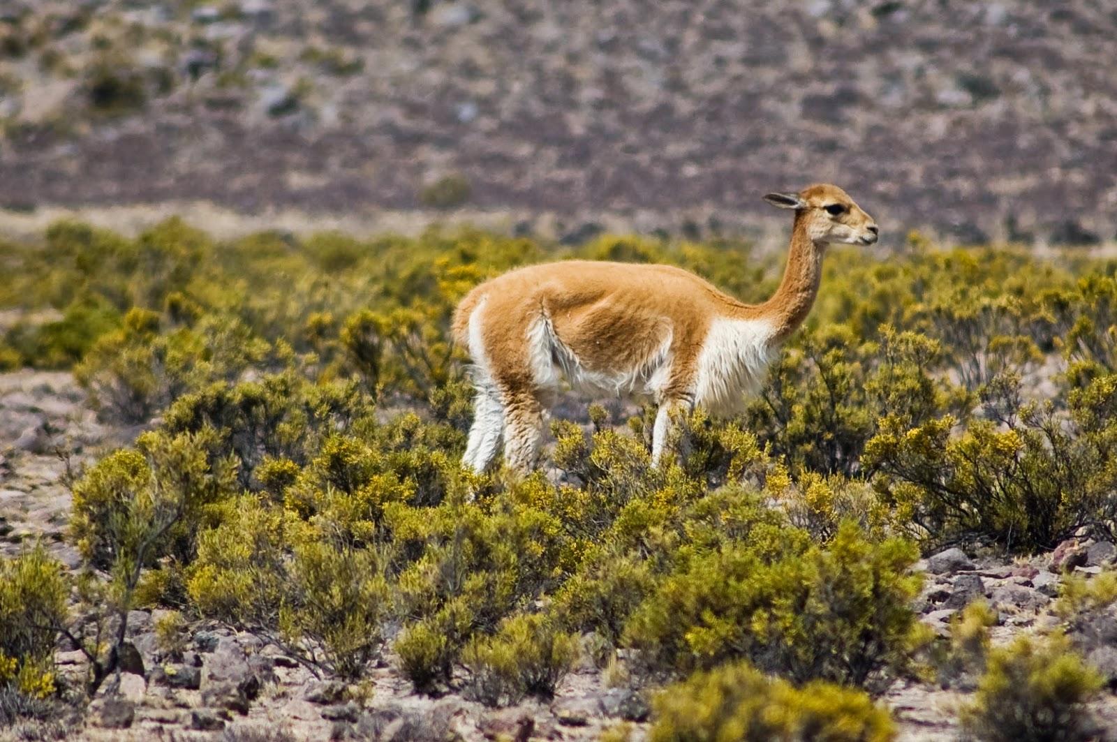 Flora Y Fauna Del Perú: IMAGENES ETHEL: IMAGENES DE FLORA Y FAUNA DE LA SIERRA
