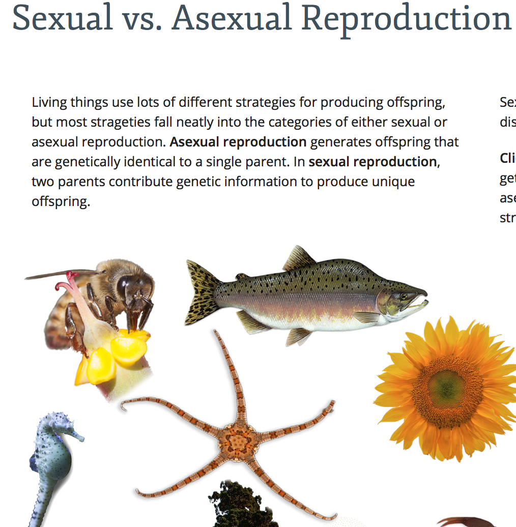 Mr  Forde - Life Science: Sexual vs  Asexual Reproduction game