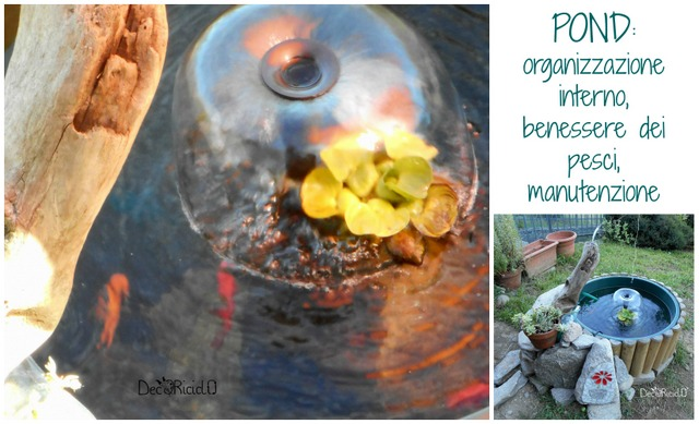 Decoriciclo il nostro pond parte 2 come abbiamo for Mini pond con pesci
