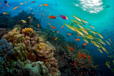Quase 60 anos após primeira visita, naturalista retorna à Austrália para captar biodiversidade com tecnologia de ponta. - Divulgação