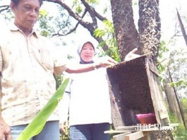 Pekarangannya Dikerubungi Lebah Jenis Langka, Guru SMA Ini Mengaku Mendapat Berkah