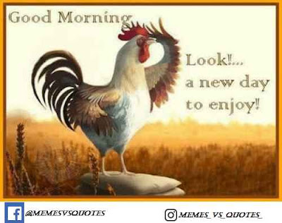 Look A New Day To Enjoys