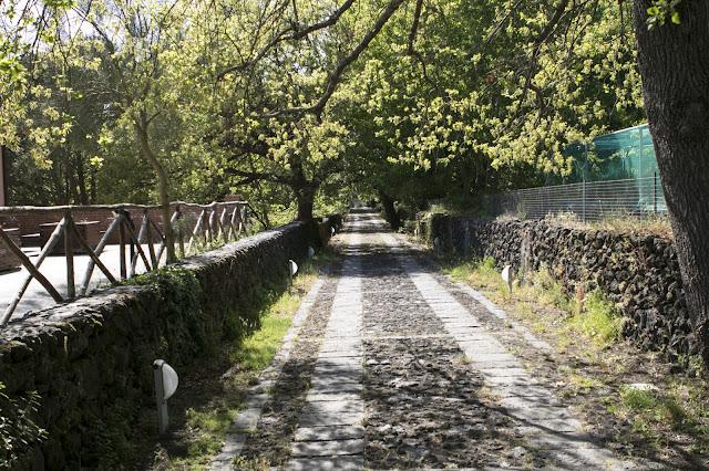 Parco dell'Etna-Sentiero del germoplasma