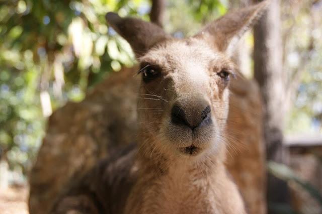Australien 2014 Die schönste Zeit meines Lebens www.nanawhatelse.at