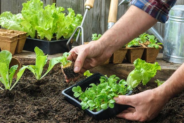 Tipps und Tricks für Garten und Balkon: «Den nicht-grünen-Daumen gibt es nicht!»