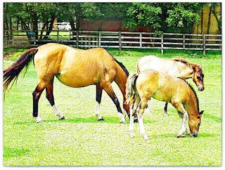 Cavalos na Cabanha Costa do Cerro, Lami, Porto Alegre