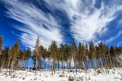 Horváth István, vers, vers-szombat, Ha fenyő maga volna, erdélyi költészet, fenyőerdő télen