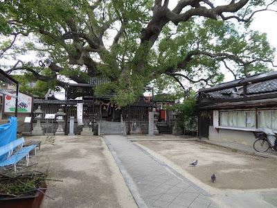 三島神社 境内 ハト