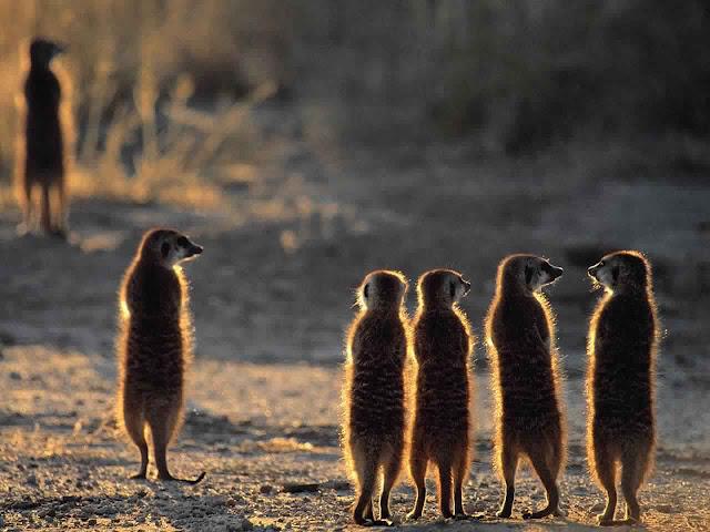 صور حيوانات في الطبيعة