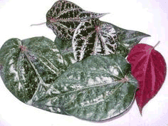 https://de-natur-indonesia.blogspot.com/2017/12/obat-kencing-nanah-herbal-alami.html