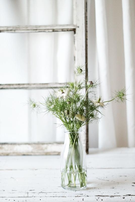Blog + Fotografie by it's me! - Milchflasche mit einem Strauß Jungfer im Grünen Nigella vor einem Holzfenster