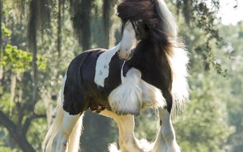Qq Wallpapers A Set Of Royal Horses