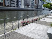 【大阪市北区】中之島公園のバラ園 土佐掘川(南側)