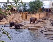 Afbeelding 2. Olifanten in het water. Bron: Waterhergebruik in Wildlands Adventure Zoo Emmen - hernieuwde sluiting van de waterkringloop