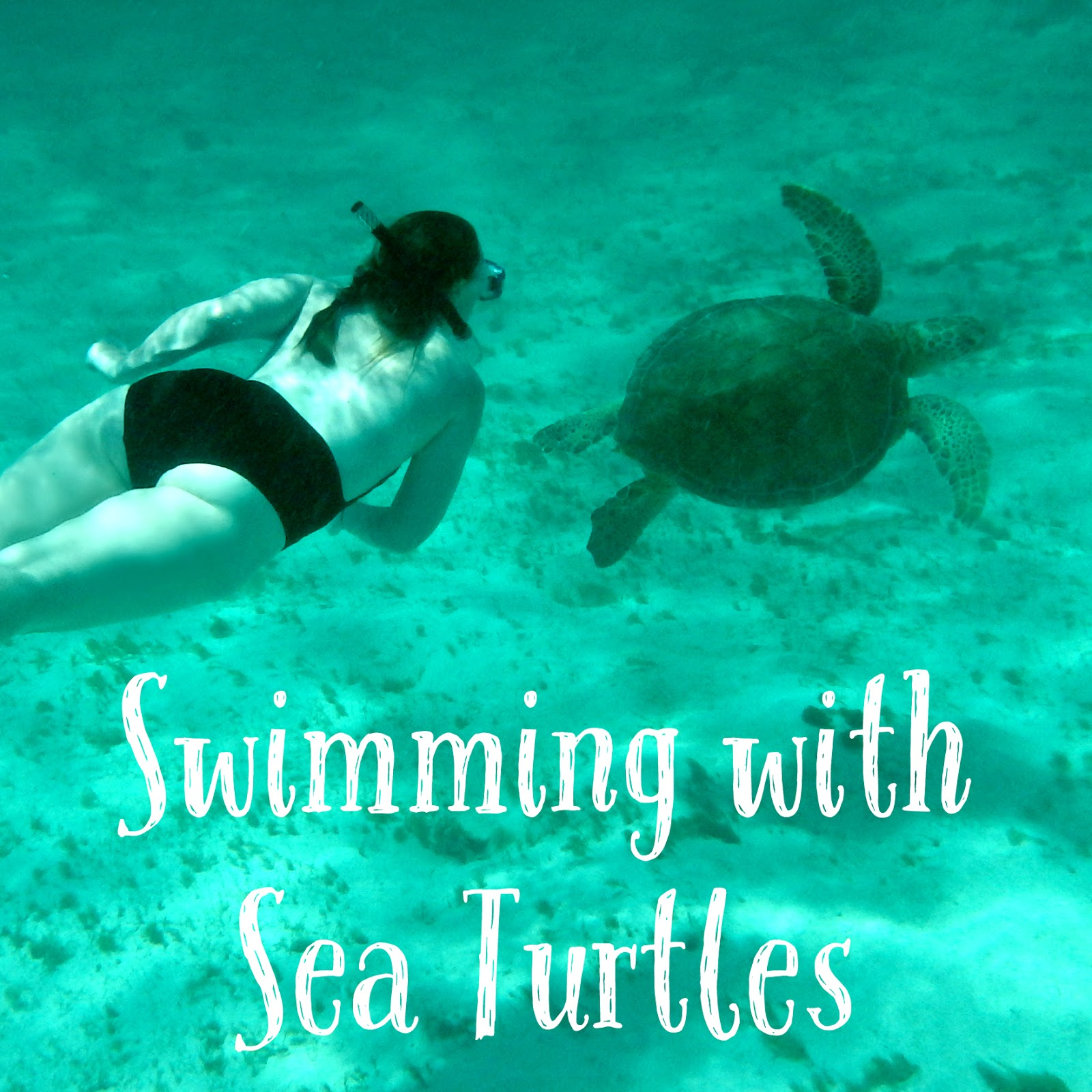 Swimming with turtles in the Tobago Cays Marine Park