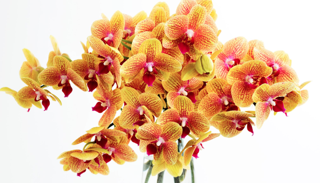 What are the Duties of a Flowers Sydney Expert?