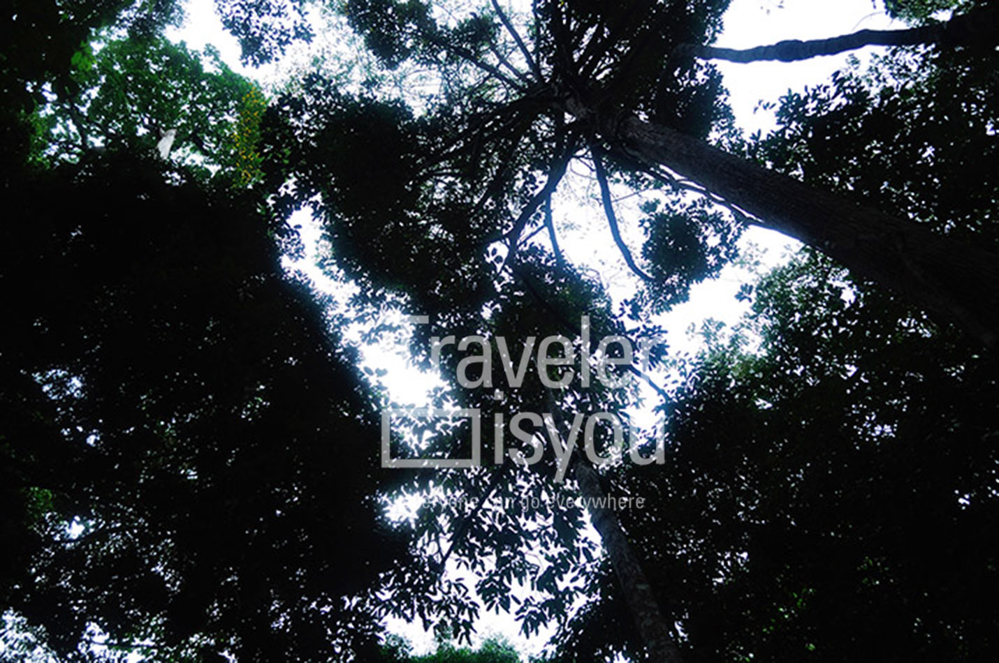 It is the Ministry's forest conservation which is managed by the Office of BKSDA Dumai. This forest is located in the middle of Dumai city, exactly in the village of Bukit Jin and Bukit Timah, west Dumai  subdistrict.