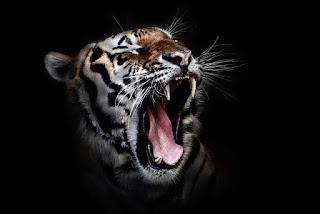 Cerita Mistis Misteri Menguak Rahasia Ilmu Manusia Harimau Sumatera Selatan