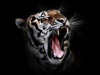 Kisah Nyata Menguak Cara Mendapatkan Ilmu Manusia Harimau