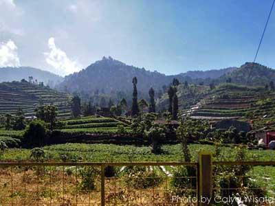 Penginapan Dekat Pos Pendakian Gunung Prau