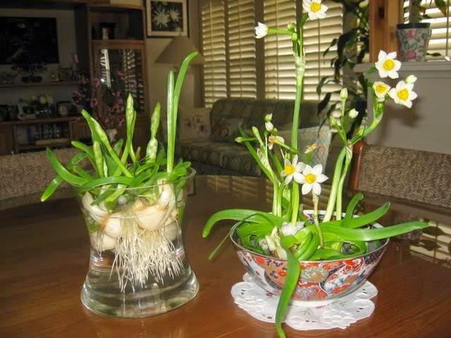 hoa thuy tien dep nhat 1
