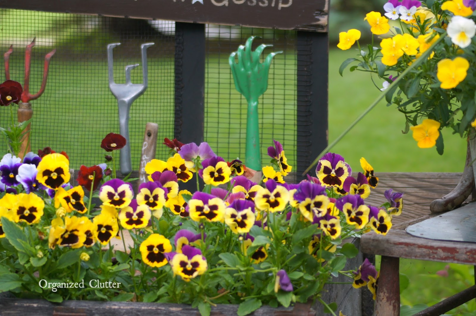 Pansies on the Deck www.organizedclutterqueen.blogspot