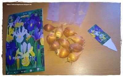 Blumenzwiebeln Iris Mix