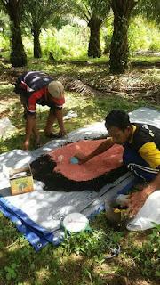 pupuk organik penyubur tanaman kelapa sawit