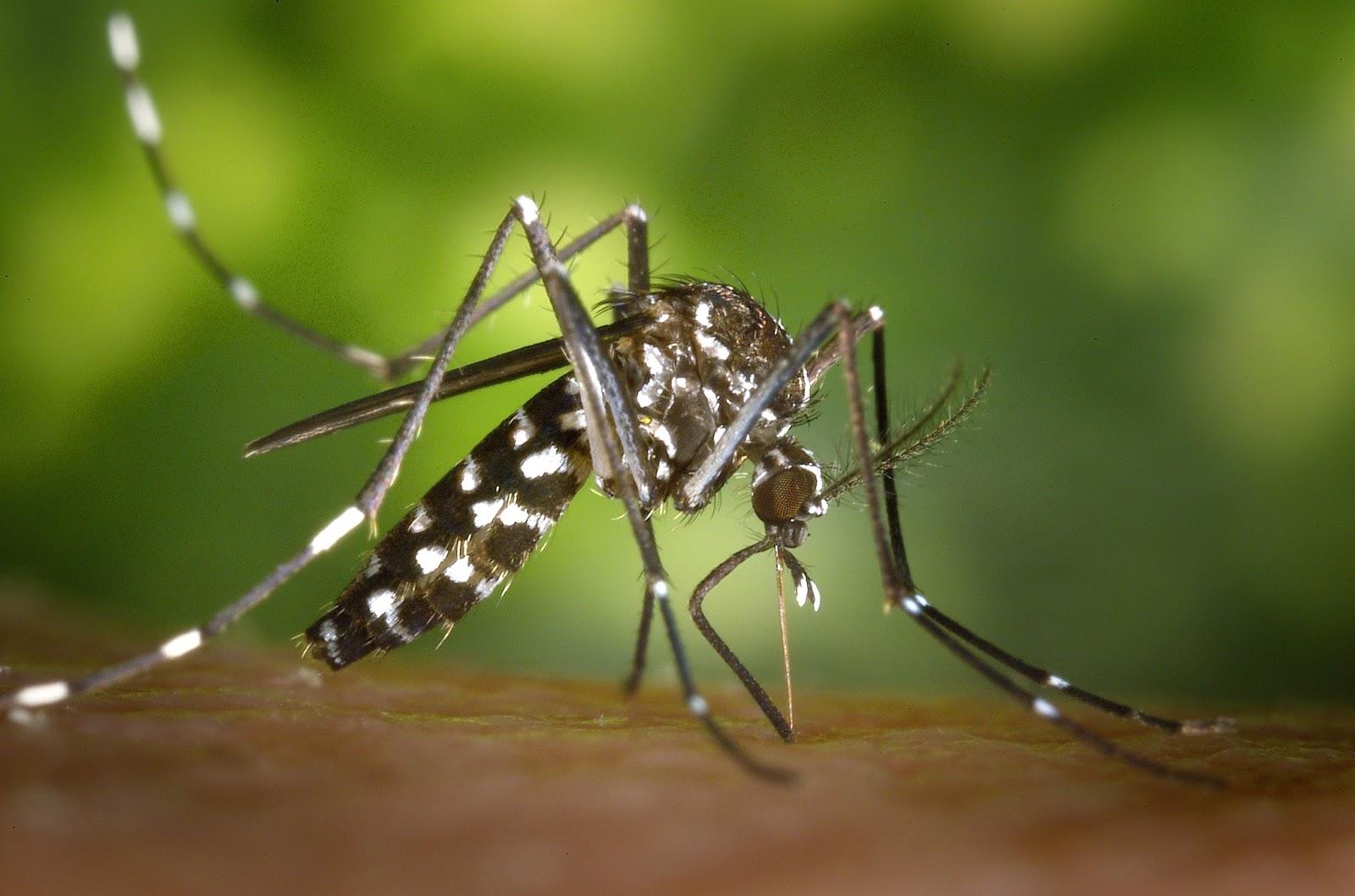 Ciencia, inventos y experimentos en casa: Matamosquitos eléctrico ...