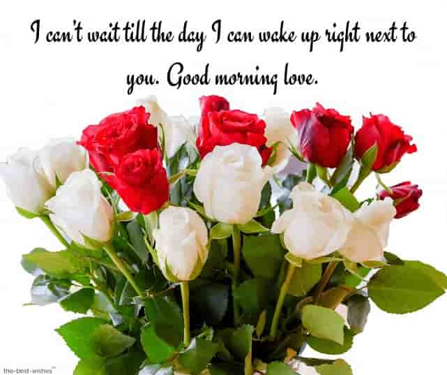 good morning love text messages to my boyfriend with roses bouquet