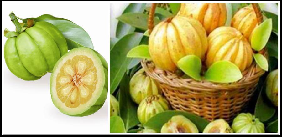 Garcinia cambogia - extracto ácido hidroxicítrico - saciante, sobrepeso