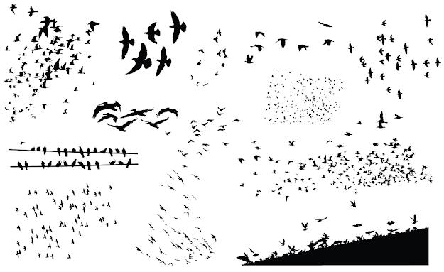 Flock Of Birds Vector Pack