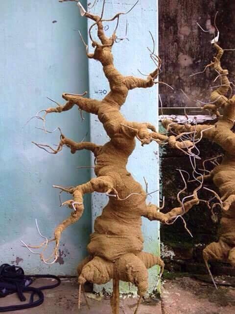 Goc bonsai mai dao the truc o Bich Cau