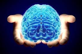 ¿A qué parte del cerebro afecta el trastorno bipolar?