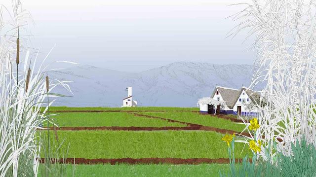 humedales, campo de arroz