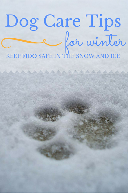 dog_snow_safety