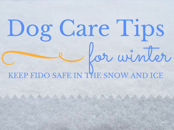 Pet Tip of the Month: Snow and Ice Safety