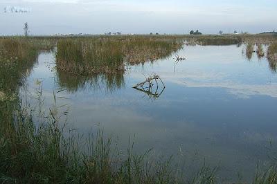 Zona d'aigües estancades