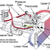 Komponen Sistem Pendingin Pada Mobil