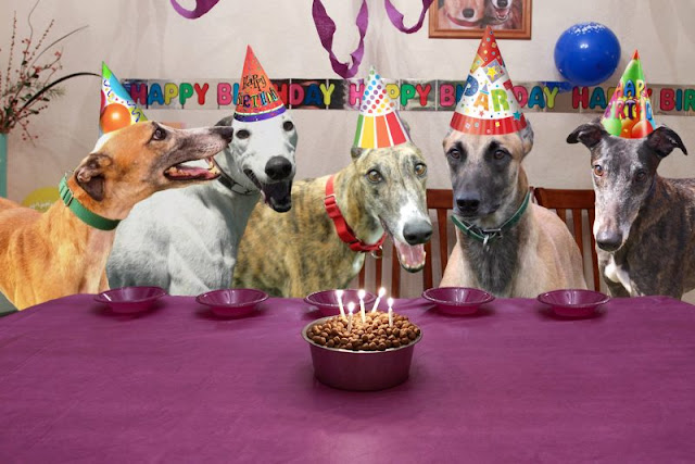 Friends of Greyhounds birthday hounds