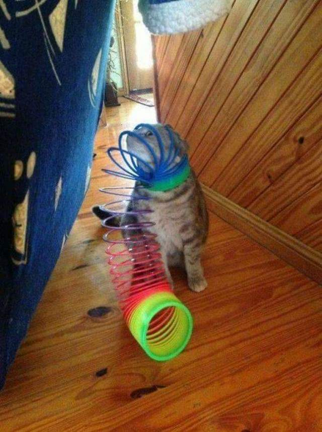 Funny cats - part 308, best cute cat picture, adorable cat pictures